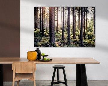 Fairytale forest van Oliver Henze