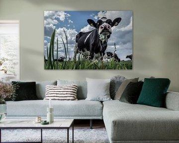 Neus(je) van de koe