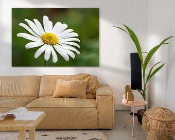 Margeritenblüte von Michael Valjak