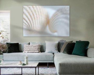 Schelpen   wit van Marianne Twijnstra-Gerrits