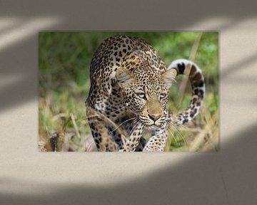 Luipaard in Zambia van Thea Kleinrouweler