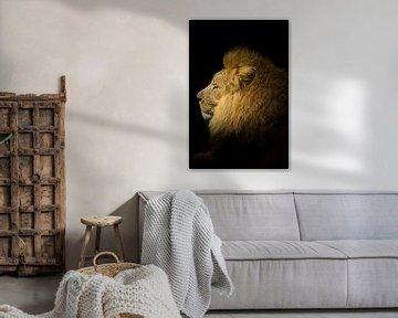 Portret van een Leeuw von Thomas Paardekooper