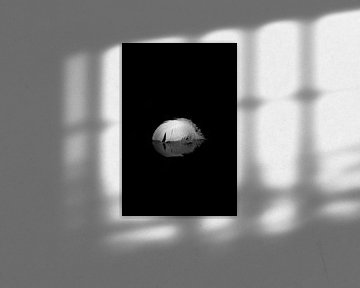 De Zwanenveer von Thomas Paardekooper