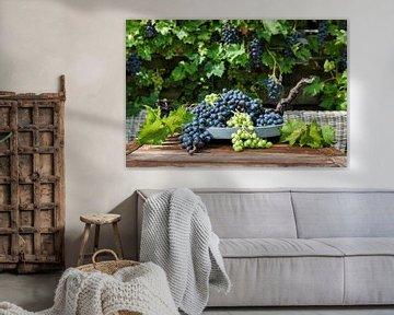 grote trossen blauwe en witte druiven
