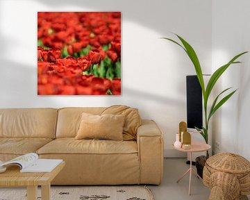 Rode tulpenveld von Floris van Woudenberg