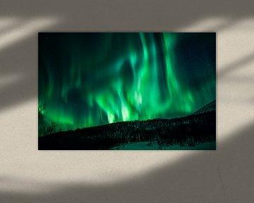 Northern Lights dancing van Koen Hoekemeijer