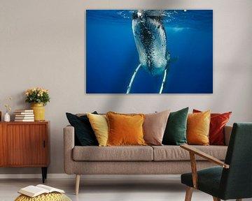 That's one big whale van Koen Hoekemeijer