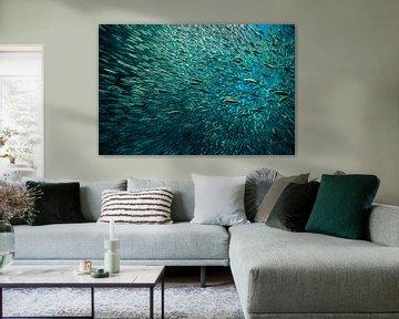 That's a lot of fish! von Koen Hoekemeijer