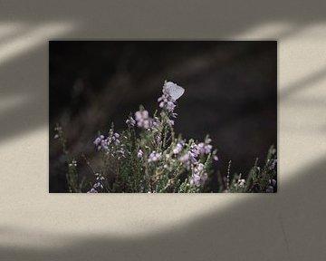 Rustende vlinder op heide von Manon Sloetjes