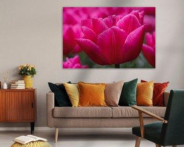 Roze Tulp von Karin Tebes