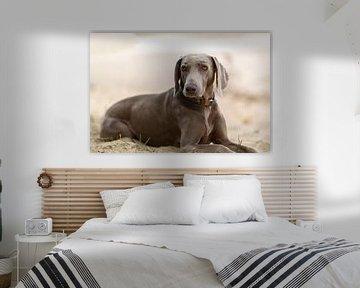 Hond von Above The Grid