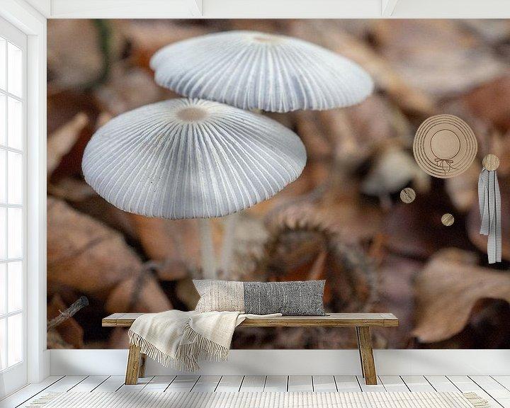 Sfeerimpressie behang: Hazenpootjes paddenstoelen in het bos van Margreet van Tricht