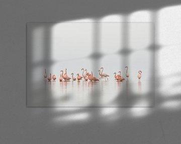 Flamingo's in Nederland von René Vos