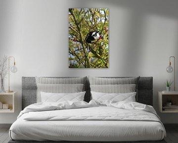 Eine Elster in einem Busch von Gerard de Zwaan