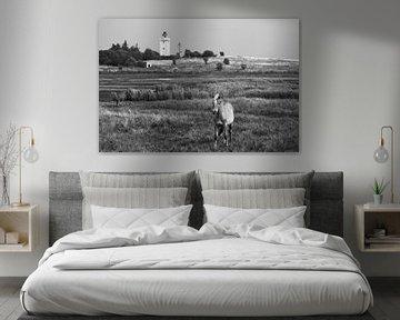 Pferd und Leuchtturm von Jörg Hausmann