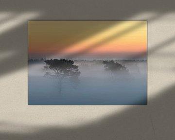 Bäume im Nebel von Jos Pannekoek