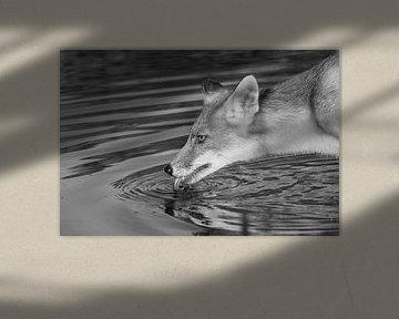 Drinkende vos. von Yvonne van der Meij