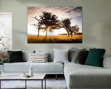 Savanna Sunrise van Andrea Gulickx