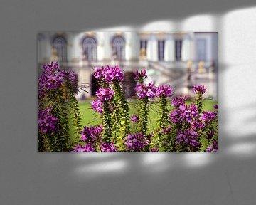 Flowers of Castle Nympfenburg Munich van Michael Nägele