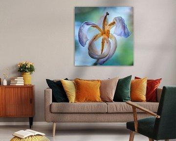 Vliegende Tulp von Jan de Vries
