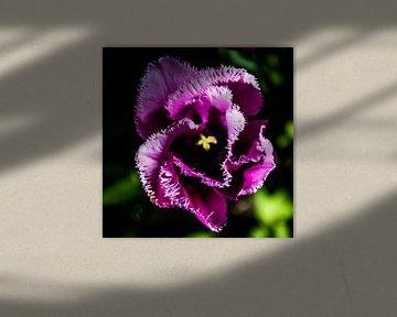 De schoonheid van een simpele tulp von Mike Bot PhotographS