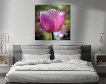 Roze Tulp von Jan de Vries
