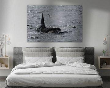 Orka (IJsland) van Berg Photostore