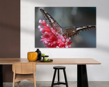 de vlinder op de rood-witte bloem - butterfly in close up - Schmetterling hautnah - Papillon se bouc von Ineke Duijzer