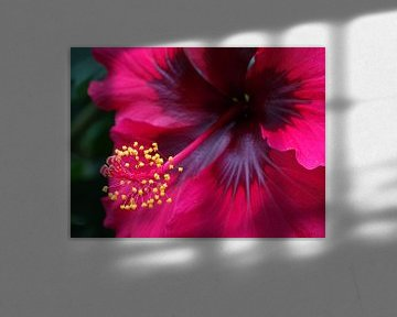 rode bloem in close-up - red flower in close up - Rote Blume Nahaufnahme - fleur rouge bouchent von Ineke Duijzer