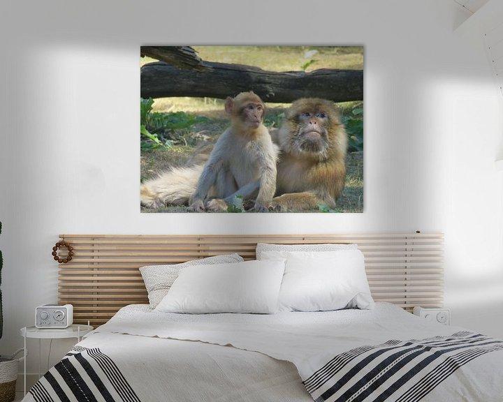 Sfeerimpressie: Aap met haar baby - monkey and her baby - Affe mit baby van Ineke Duijzer