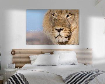 Lion's eyes - Portrait eines Löwen sur Studio voor Beeld