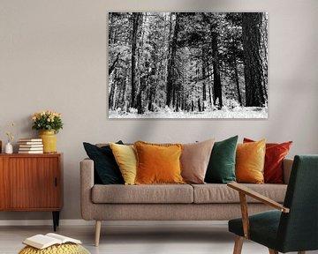 Bomen in Yosemite Park von erik driessen