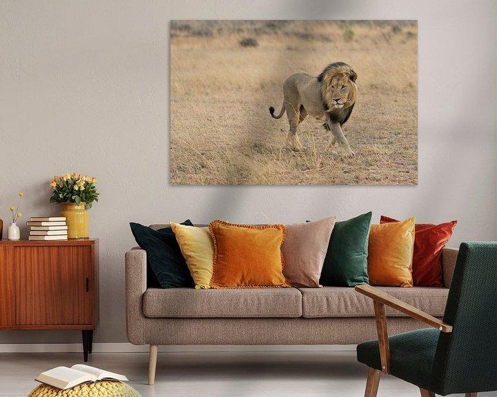 Sfeerimpressie: Leeuw in het wild van Capture the Light
