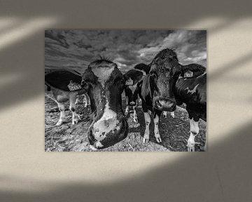 Twee Pinken, koeien von Tara Kiers