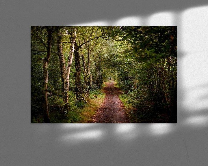 Sfeerimpressie: door het bos van claes touber