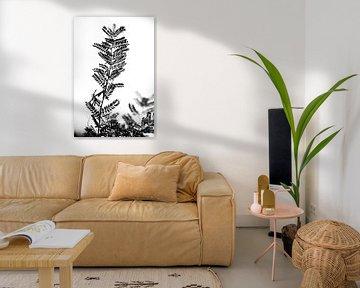 Contouren van een Robinia tak van Tot Kijk Fotografie: natuur aan de muur