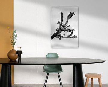 Walnoottak (zwartwit) van Tot Kijk Fotografie: natuur aan de muur