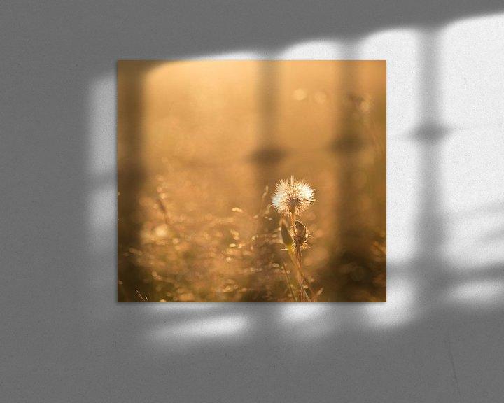 Sfeerimpressie: Zomerwarmte van Rudy De Maeyer