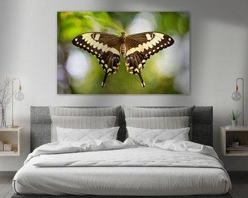 koninginnenpage (Papilio machaon) von Sran Vld Fotografie