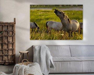 Konikpaarden in de Ooijpolder von Alice Berkien-van Mil