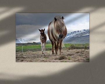 Der jüngste Spross der Familie von Elisa in Iceland