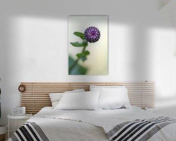 Paarse distel in de knop van Tot Kijk Fotografie: natuur aan de muur