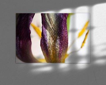 Seidenglanz Nahaufnahme Tulpe von Tot Kijk Fotografie: natuur aan de muur