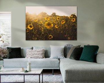 Sonnenblumenfeld von Melanie Schat