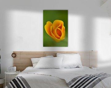 Veldbloem oranje von Sascha van Dam