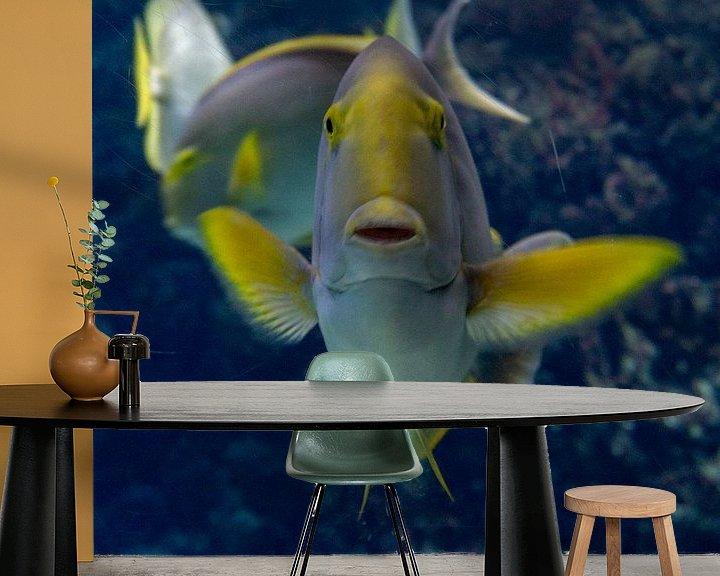 Beispiel fototapete: Tropische Fischhaltungen. von Anjo ten Kate