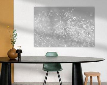 Waving in the wind (schwarz und weiß) von Marianne Twijnstra-Gerrits