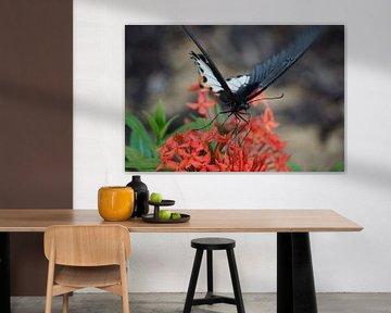 Vlinder von Bart Cornelis de Groot