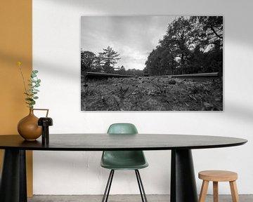 Kamp Westerbork von Foto Amsterdam / Peter Bartelings