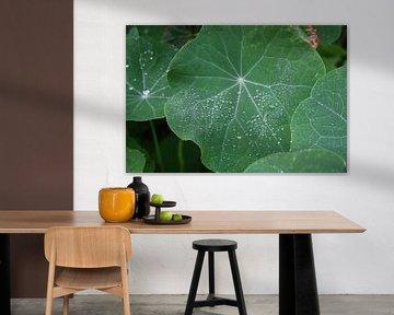 groen blad met regendruppels van Dewi Hoffs